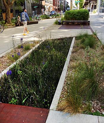 Rain garden and filtration at Bullitt Center